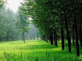 作文:《美丽的小树林》 作者:刘弋涵