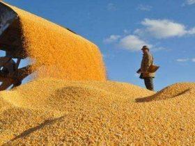 """推进""""一村一品""""积极开展优质粮食工程建设"""